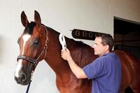 Kuchelmiss, Tierarzt ueberprueft die Identitaet eines Pferdes mittels Mikrochiplesegeraet